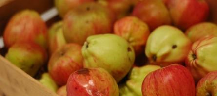 090923 Compote de pommes du jardin4 (7) (Copier)